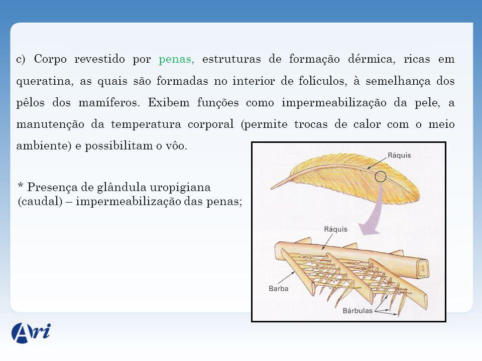 c) Corpo revestido por penas, estruturas de formação dérmica, ricas em queratina, as quais são formadas no interior de folículos, à semelhança dos pêlos dos mamíferos.