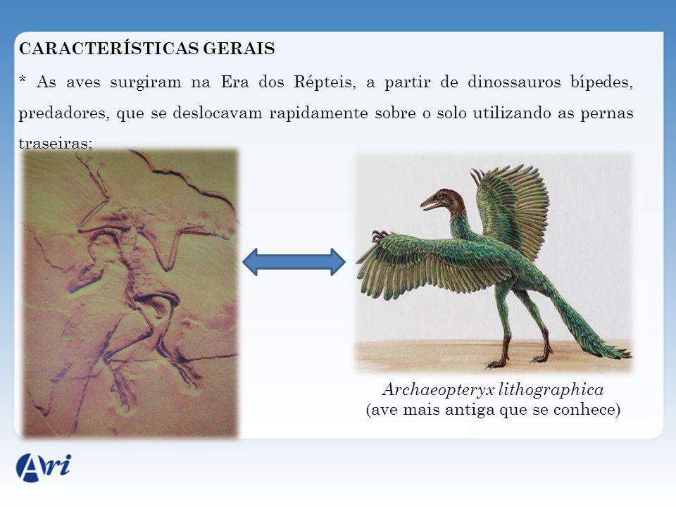 CARACTERÍSTICAS GERAIS * As aves surgiram na Era dos Répteis, a partir de dinossauros bípedes, predadores, que se deslocavam rapidamente sobre o solo utilizando as pernas traseiras; Archaeopteryx lithographica (ave mais antiga que se conhece)
