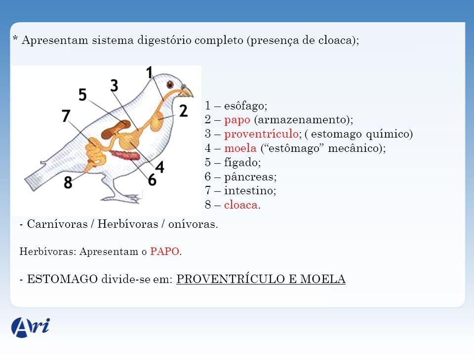 * Apresentam sistema digestório completo (presença de cloaca); 1 – esôfago; 2 – papo (armazenamento); 3 – proventrículo; ( estomago químico) 4 – moela (estômago mecânico); 5 – fígado; 6 – pâncreas; 7 – intestino; 8 – cloaca.