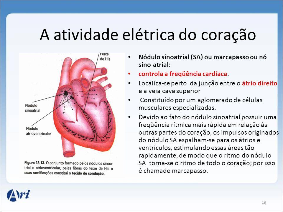 A atividade elétrica do coração Nódulo sinoatrial (SA) ou marcapasso ou nó sino-atrial: controla a freqüência cardíaca. Localiza-se perto da junção en