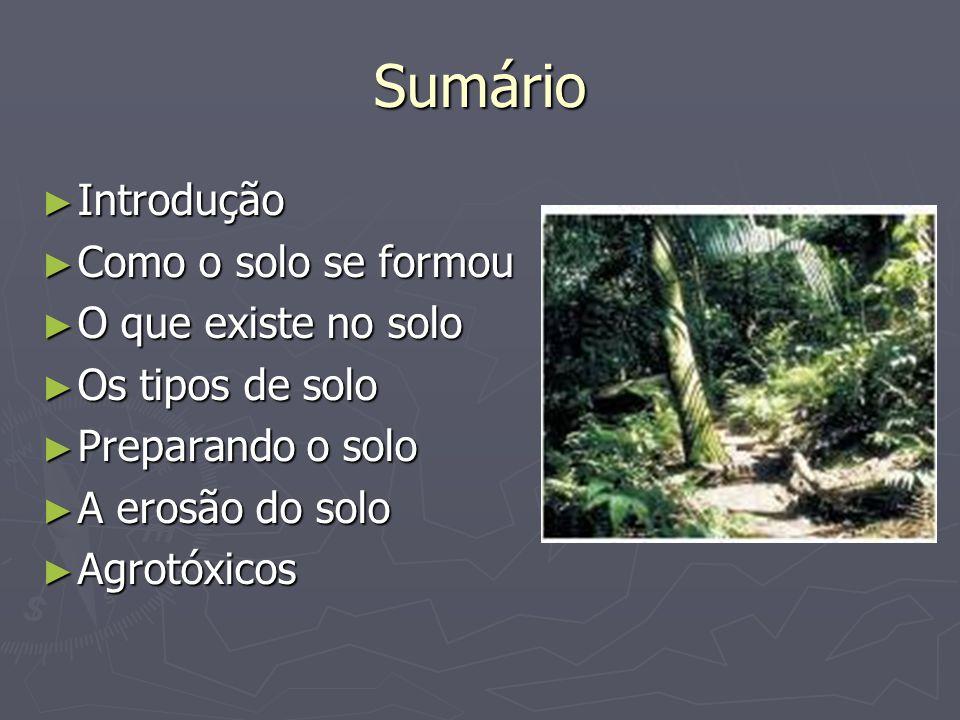 Sumário Introdução Introdução Como o solo se formou Como o solo se formou O que existe no solo O que existe no solo Os tipos de solo Os tipos de solo