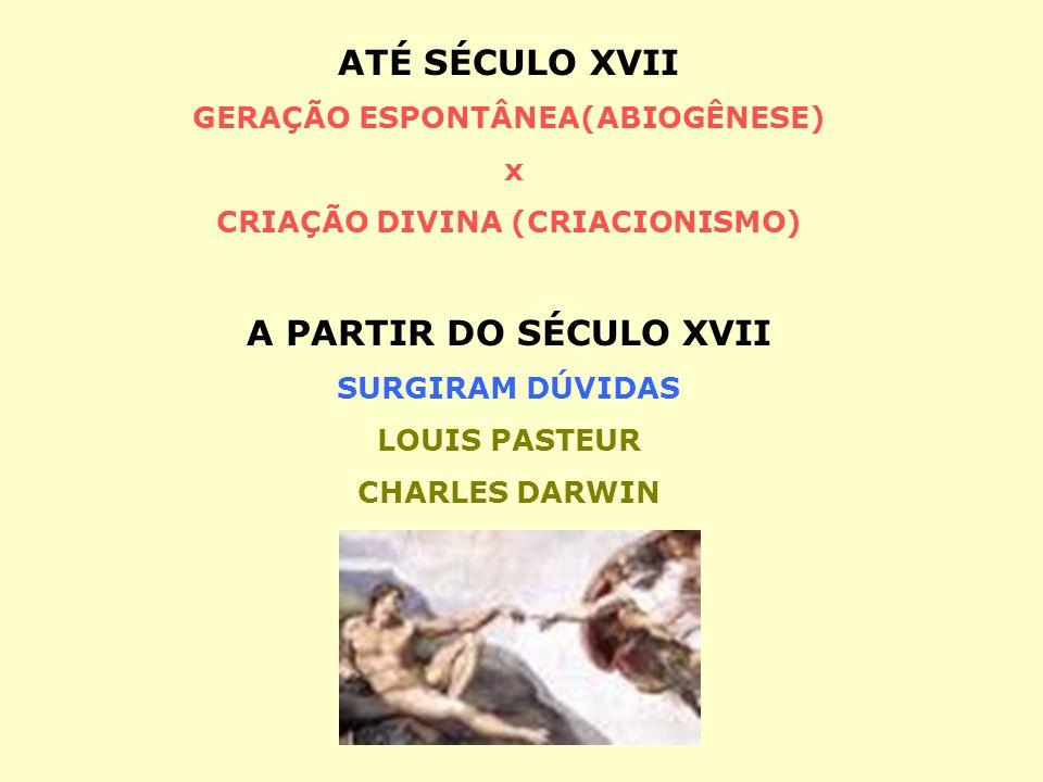 ATÉ SÉCULO XVII GERAÇÃO ESPONTÂNEA(ABIOGÊNESE) x CRIAÇÃO DIVINA (CRIACIONISMO) A PARTIR DO SÉCULO XVII SURGIRAM DÚVIDAS LOUIS PASTEUR CHARLES DARWIN