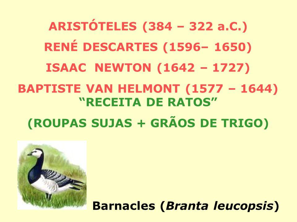 ARISTÓTELES (384 – 322 a.C.) RENÉ DESCARTES (1596– 1650) ISAAC NEWTON (1642 – 1727) BAPTISTE VAN HELMONT (1577 – 1644) RECEITA DE RATOS (ROUPAS SUJAS + GRÃOS DE TRIGO) Barnacles (Branta leucopsis)