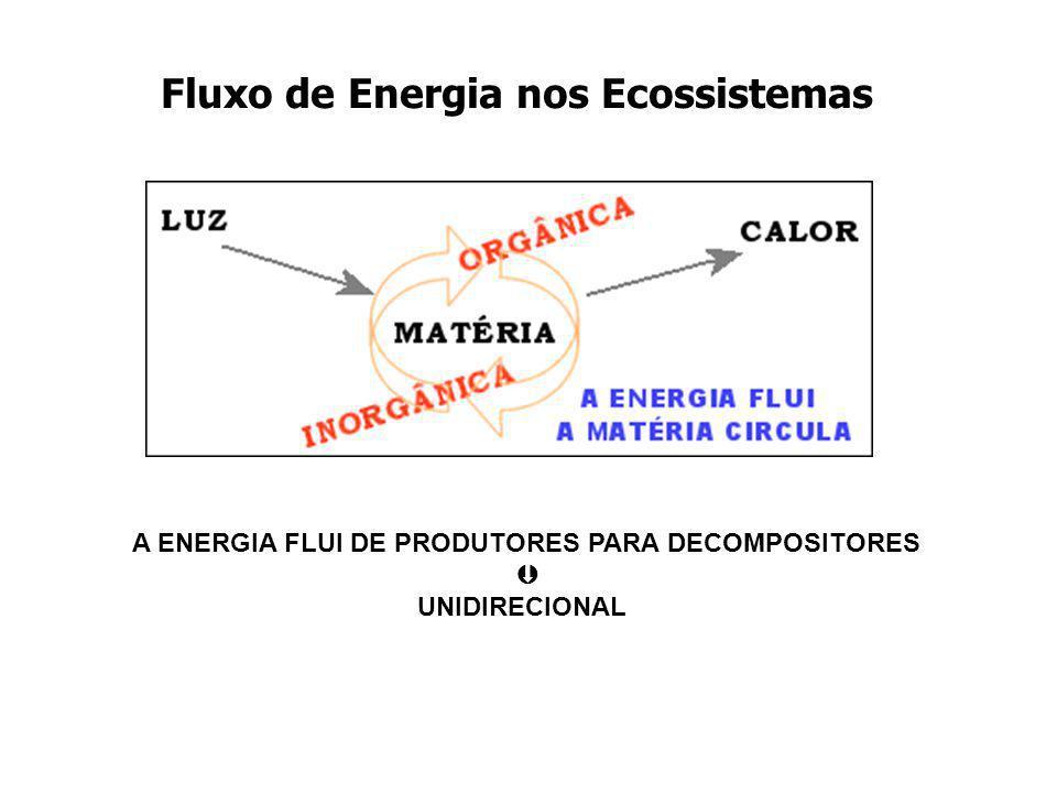 Fluxo de Energia nos Ecossistemas A ENERGIA FLUI DE PRODUTORES PARA DECOMPOSITORES UNIDIRECIONAL