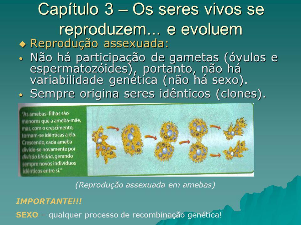 Capítulo 3 – Os seres vivos se reproduzem... e evoluem Reprodução assexuada: Reprodução assexuada: Não há participação de gametas (óvulos e espermatoz