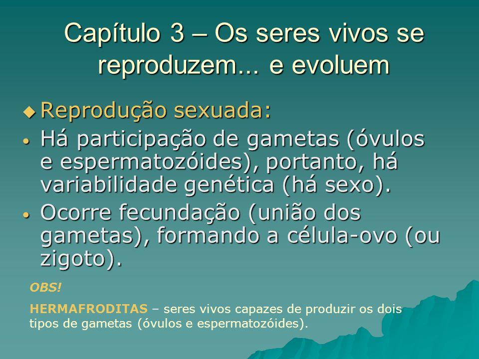 Capítulo 3 – Os seres vivos se reproduzem... e evoluem Reprodução sexuada: Reprodução sexuada: Há participação de gametas (óvulos e espermatozóides),