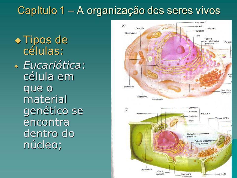 Capítulo 1 – A organização dos seres vivos Tipos de células: Tipos de células: Eucariótica: célula em que o material genético se encontra dentro do nú