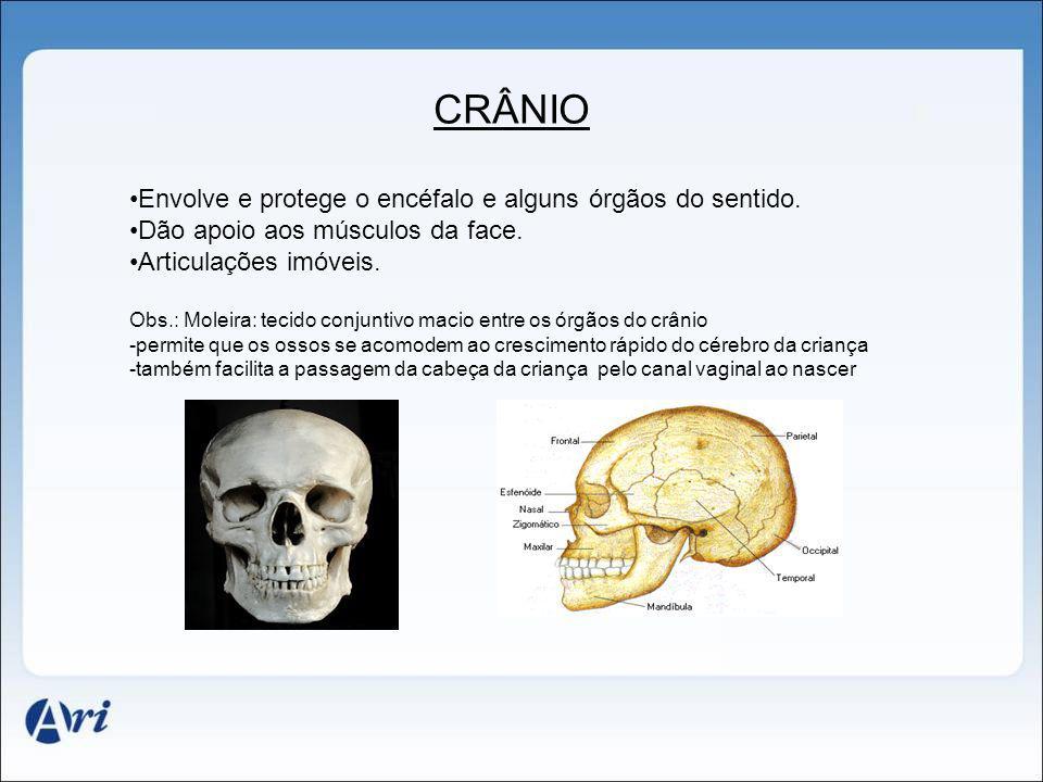 CRÂNIO Envolve e protege o encéfalo e alguns órgãos do sentido. Dão apoio aos músculos da face. Articulações imóveis. Obs.: Moleira: tecido conjuntivo