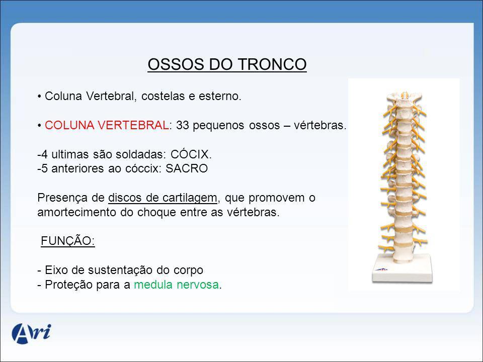 OSSOS DO TRONCO Coluna Vertebral, costelas e esterno. COLUNA VERTEBRAL: 33 pequenos ossos – vértebras. -4 ultimas são soldadas: CÓCIX. -5 anteriores a