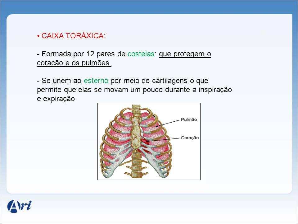 CAIXA TORÁXICA: - Formada por 12 pares de costelas: que protegem o coração e os pulmões. - Se unem ao esterno por meio de cartilagens o que permite qu