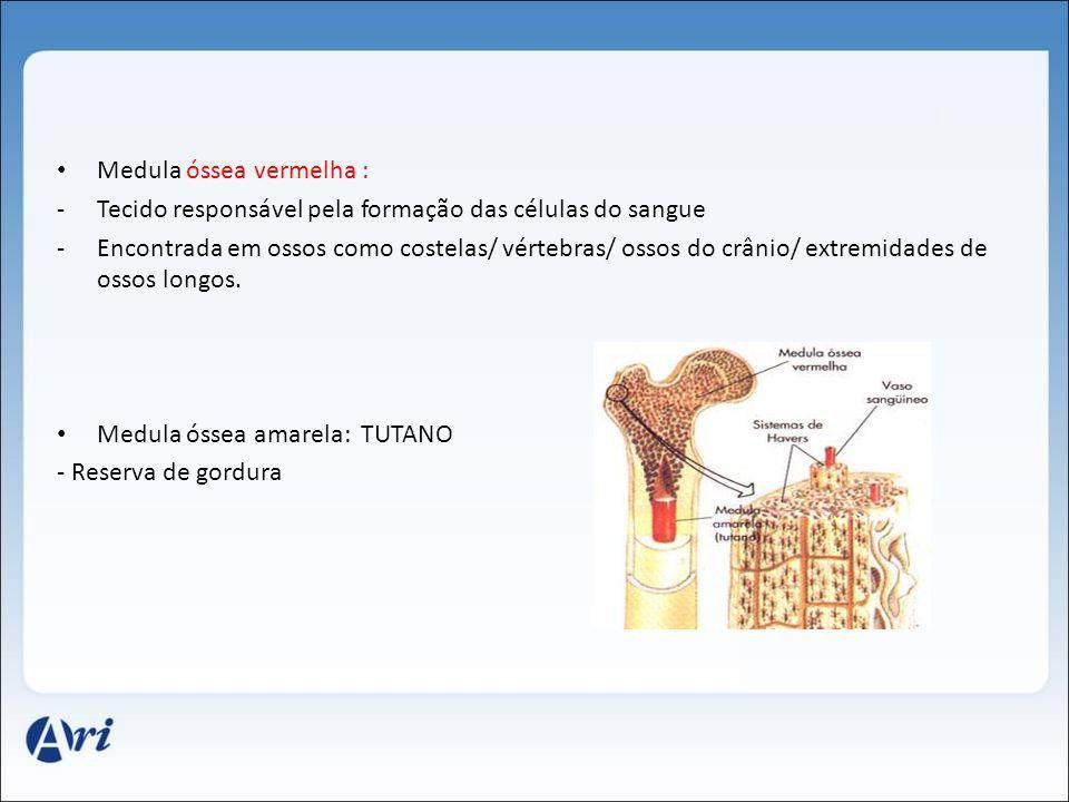 Medula óssea vermelha : -Tecido responsável pela formação das células do sangue -Encontrada em ossos como costelas/ vértebras/ ossos do crânio/ extrem