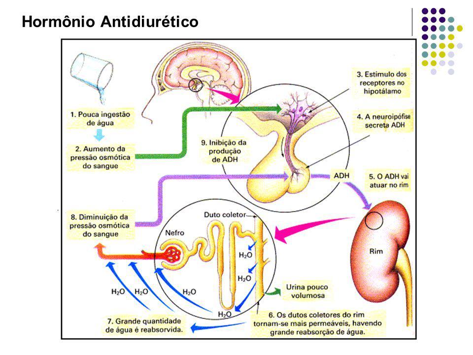 Hormônio Antidiurético