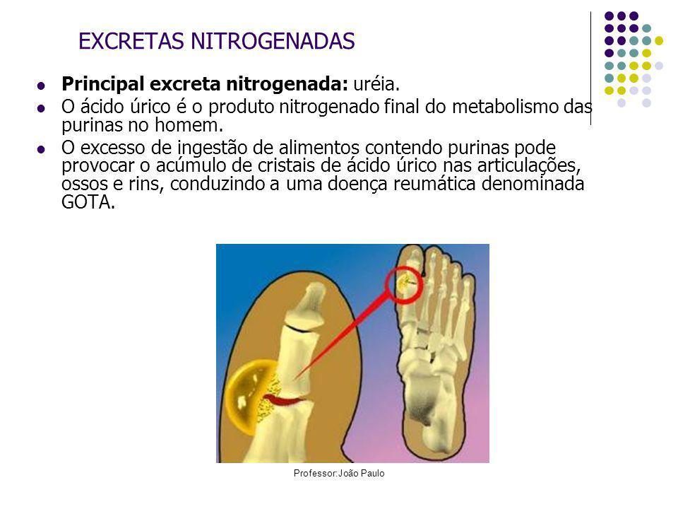 Professor:João Paulo EXCRETAS NITROGENADAS EXCRETA NITROGENA DA VALORES NORMAIS HomemMulher Ácido úrico3,5 a 7,5 mg/dL2,6 a 6,0 mg/dL Uréia15 a 50 mg/dL