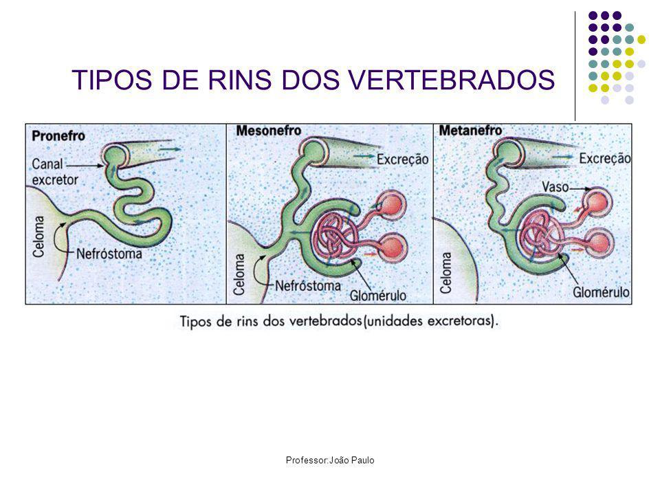 Professor:João Paulo TIPOS DE RINS DOS VERTEBRADOS