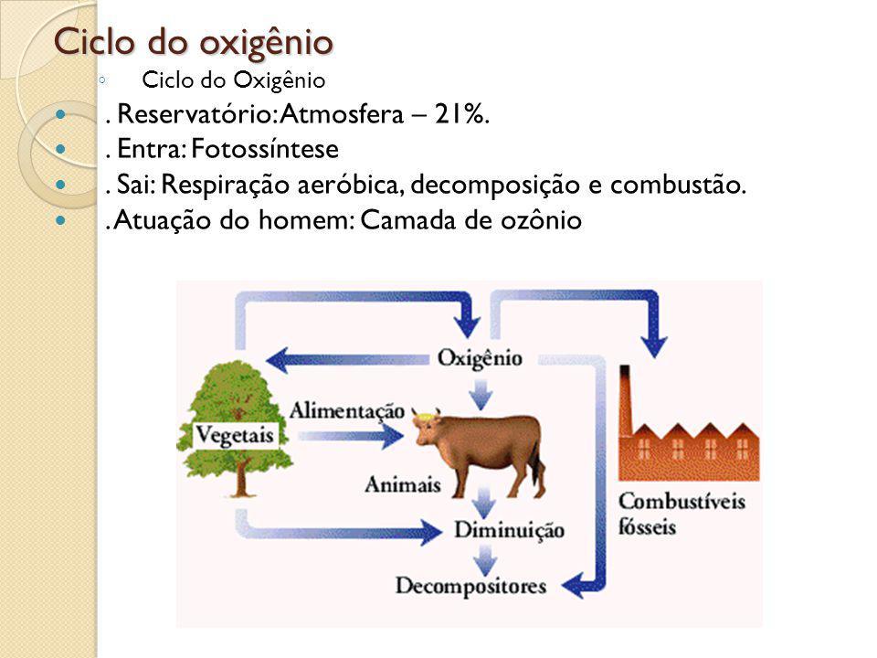 Ciclo do oxigênio Ciclo do Oxigênio. Reservatório: Atmosfera – 21%.. Entra: Fotossíntese. Sai: Respiração aeróbica, decomposição e combustão.. Atuação