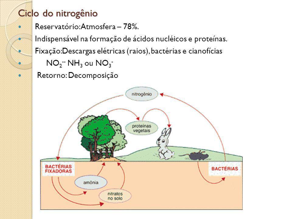 Ciclo do nitrogênio Reservatório: Atmosfera – 78%. Indispensável na formação de ácidos nucléicos e proteínas. Fixação:Descargas elétricas (raios), bac
