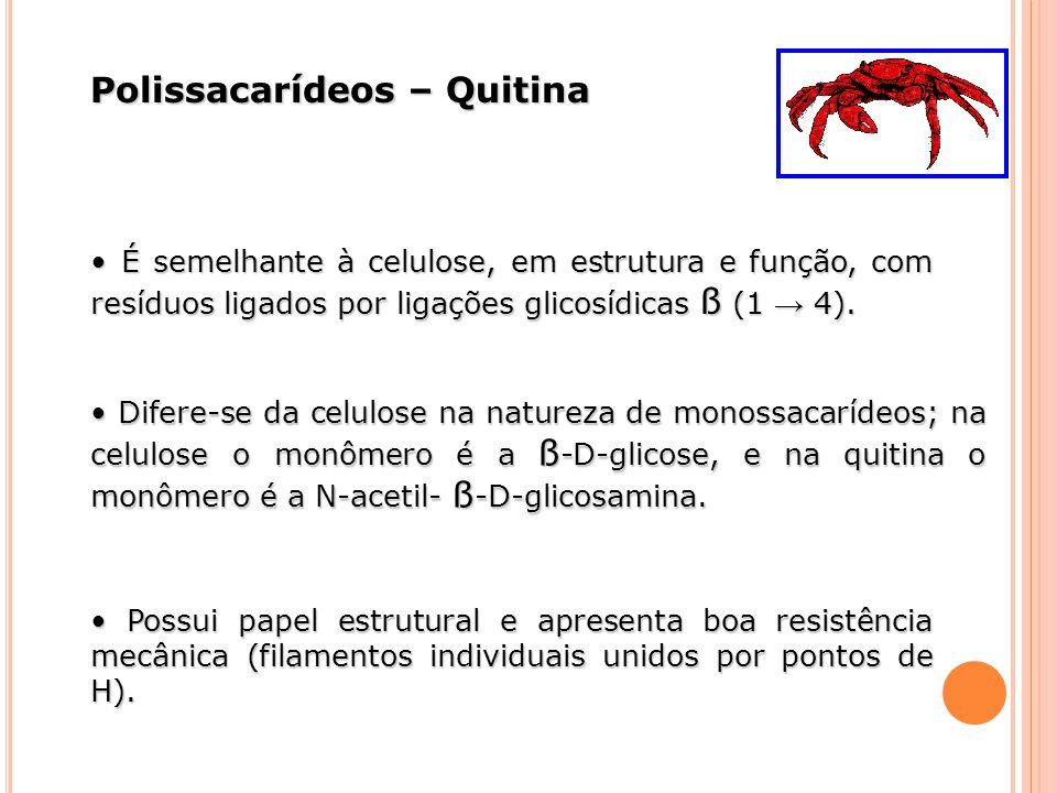 Polissacarídeos – Quitina É semelhante à celulose, em estrutura e função, com resíduos ligados por ligações glicosídicas ß (1 4). É semelhante à celul