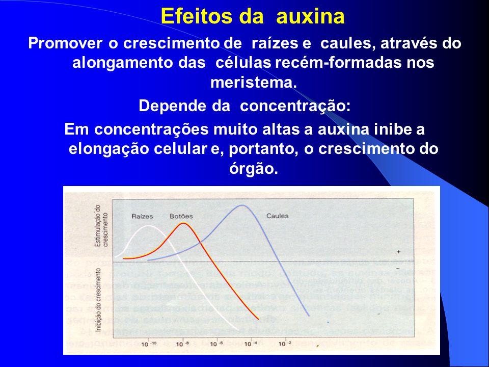 Auxinas Principal auxina: ácido indolacético (AIA) Produzida principalmente no meristema apical do caule e transportada através das células do parênqu
