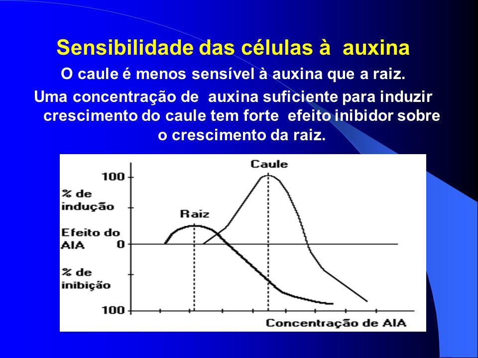 Efeitos da auxina Promover o crescimento de raízes e caules, através do alongamento das células recém-formadas nos meristema. Depende da concentração:
