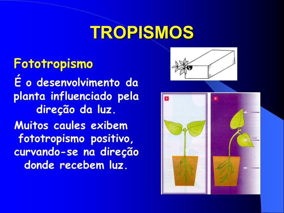Auxina e tropismos É resultado da ação da auxina sobre a elongação celular. Quando uma planta é iluminada unidirecionalmente, a auxina migra para o la