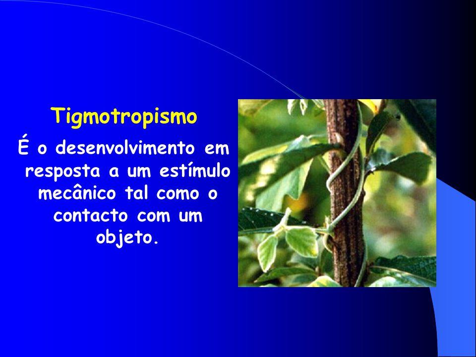 Geotropismo D esenvolvimento da planta em resposta à direção da gravidade. Os caules geralmente têm geotropismo negativo e nas raízes, o geotropismo é