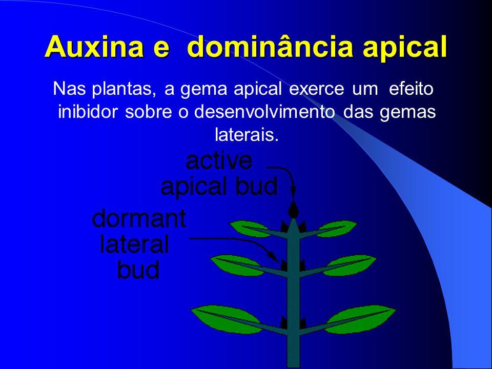 O enrolamento das gavinhas que ajuda a prender a planta ao suporte é um exemplo de tigmotropismo.