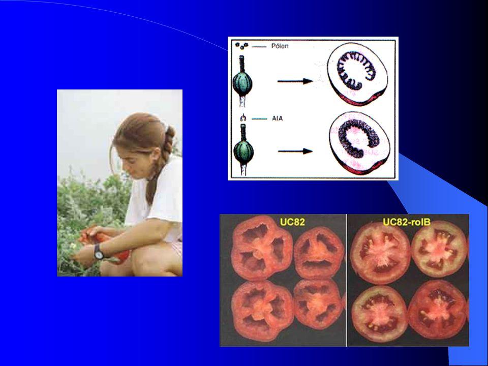 Auxina e desenvolvimento de frutos Auxina e desenvolvimento de frutos O crescimento dos frutos é estimulado pela auxina liberada pelas sementes em for
