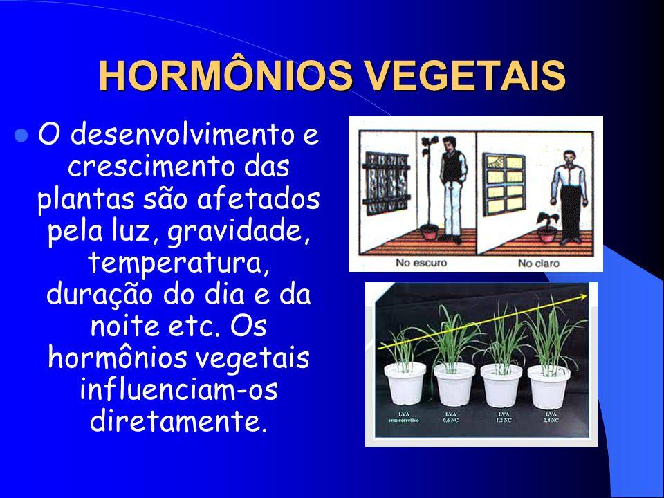 HORMÔNIOS VEGETAIS O desenvolvimento e crescimento das plantas são afetados pela luz, gravidade, temperatura, duração do dia e da noite etc.