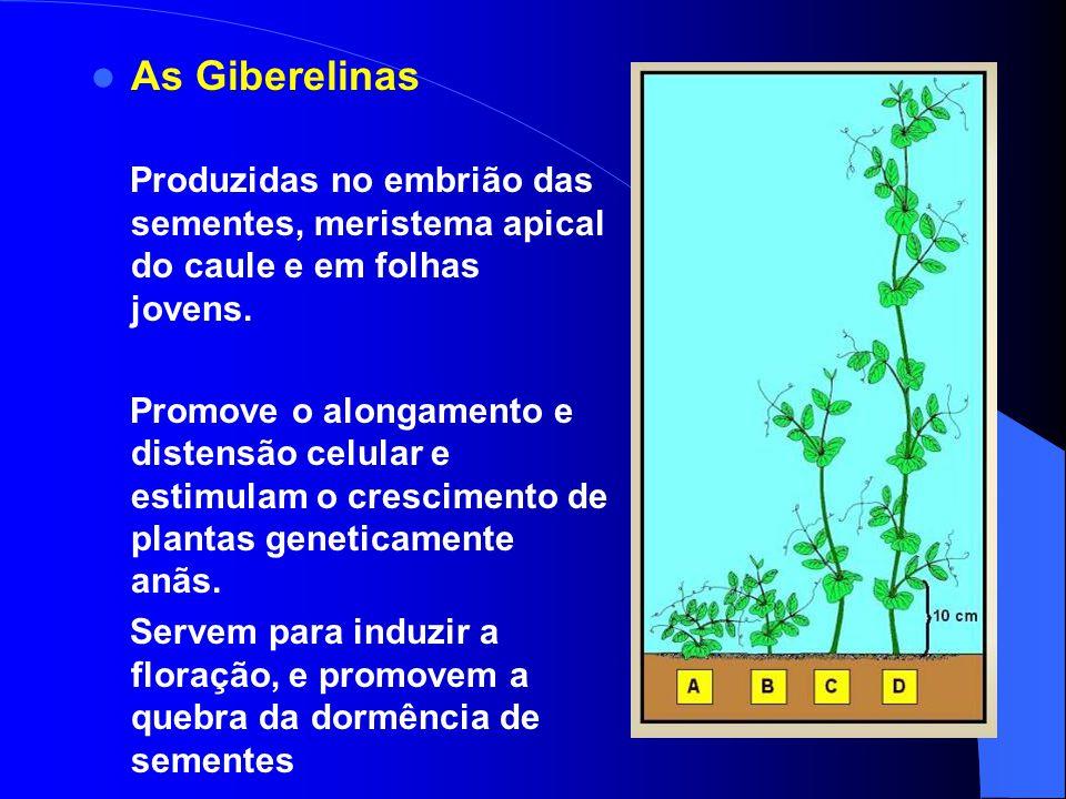 As Giberelinas Produzidas no embrião das sementes, meristema apical do caule e em folhas jovens.