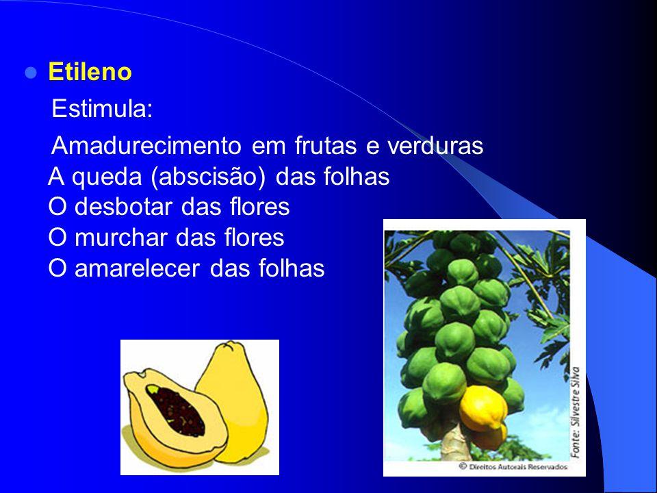As Citocininas Grupo de substâncias reguladoras do crescimento e desenvolvimento vegetal Encontradas em sementes em germinação e frutos jovens. Estimu