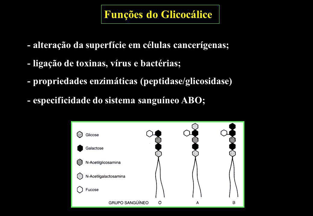 - propriedades enzimáticas (peptidase/glicosidase) - especificidade do sistema sanguíneo ABO; - alteração da superfície em células cancerígenas; - lig