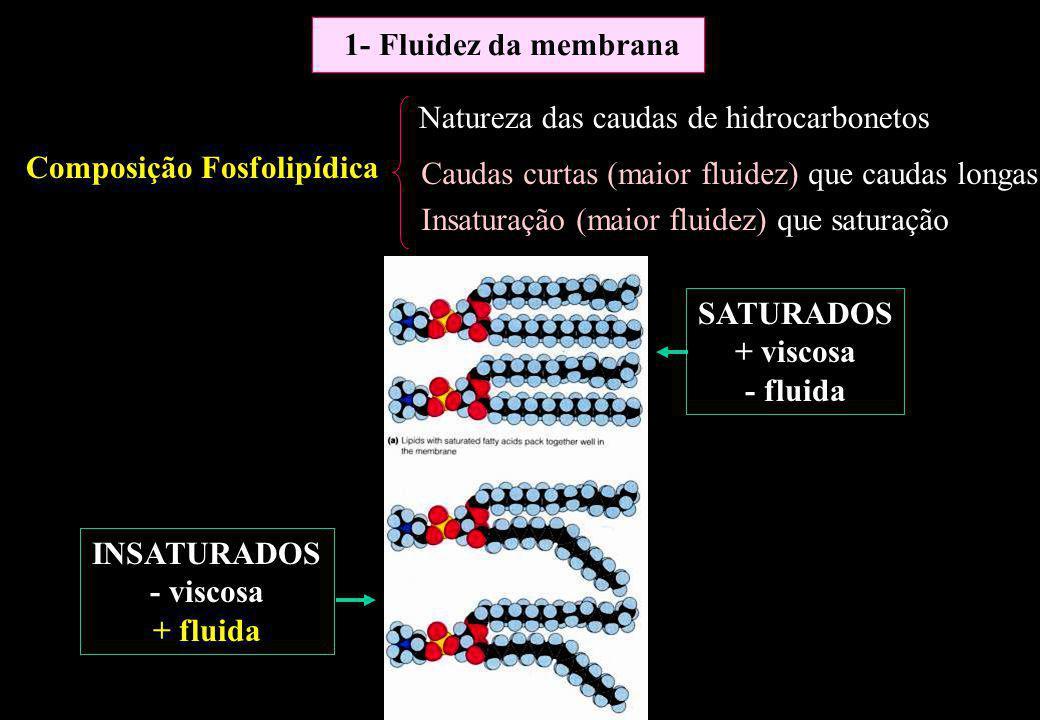 Composição Fosfolipídica Natureza das caudas de hidrocarbonetos Caudas curtas (maior fluidez) que caudas longas Insaturação (maior fluidez) que satura