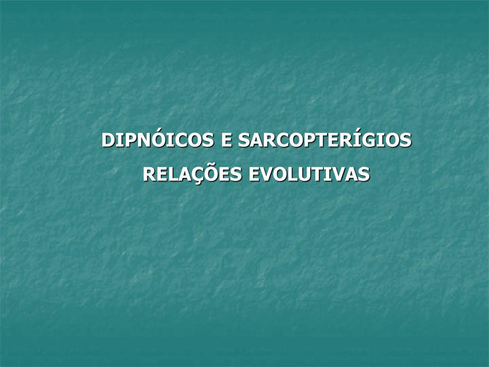 DIPNÓICOS E SARCOPTERÍGIOS RELAÇÕES EVOLUTIVAS