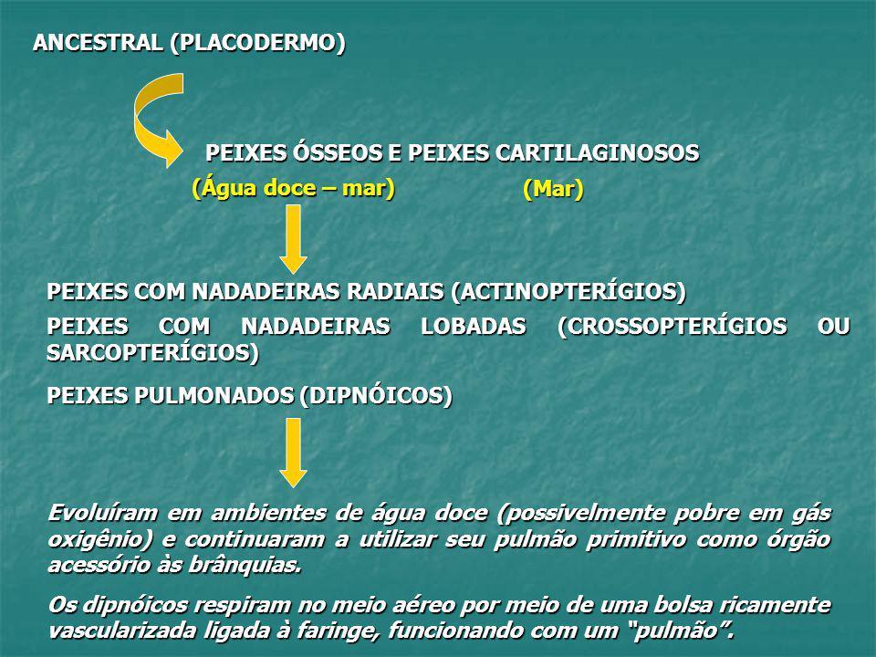 ANCESTRAL (PLACODERMO) PEIXES ÓSSEOS E PEIXES CARTILAGINOSOS (Mar) (Água doce – mar) PEIXES COM NADADEIRAS RADIAIS (ACTINOPTERÍGIOS) PEIXES COM NADADE