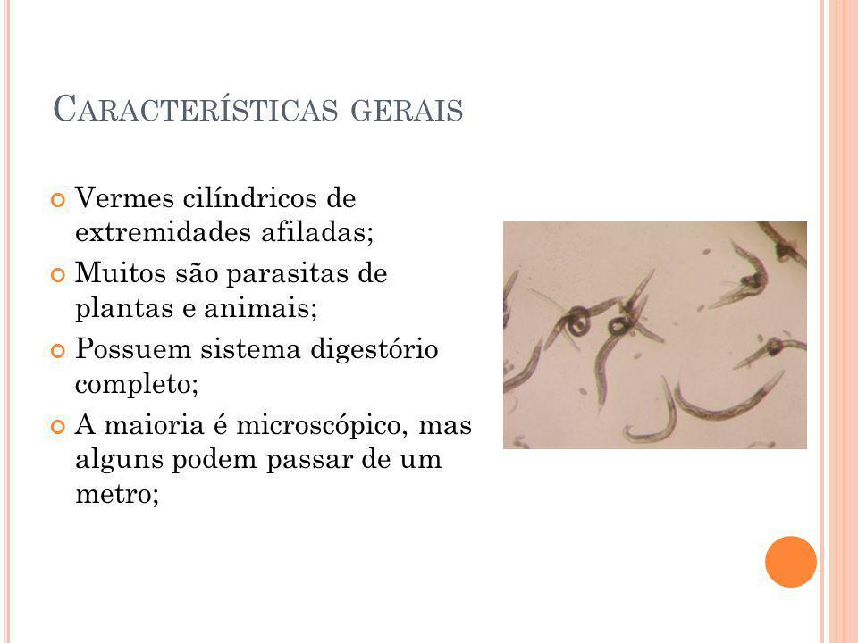 C ARACTERÍSTICAS GERAIS Vermes cilíndricos de extremidades afiladas; Muitos são parasitas de plantas e animais; Possuem sistema digestório completo; A