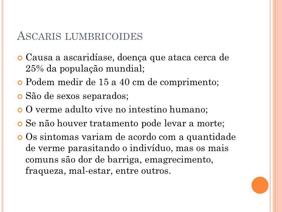 A SCARIS LUMBRICOIDES Causa a ascaridíase, doença que ataca cerca de 25% da população mundial; Podem medir de 15 a 40 cm de comprimento; São de sexos
