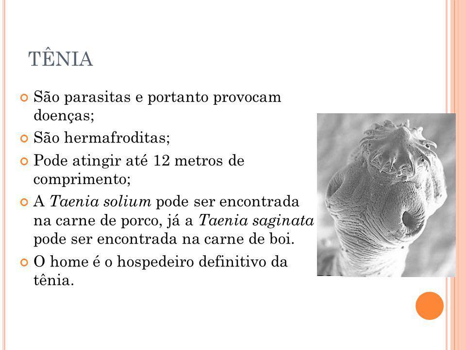 TÊNIA São parasitas e portanto provocam doenças; São hermafroditas; Pode atingir até 12 metros de comprimento; A Taenia solium pode ser encontrada na
