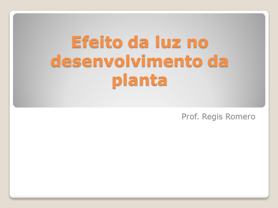Efeito da luz no desenvolvimento da planta Prof. Regis Romero