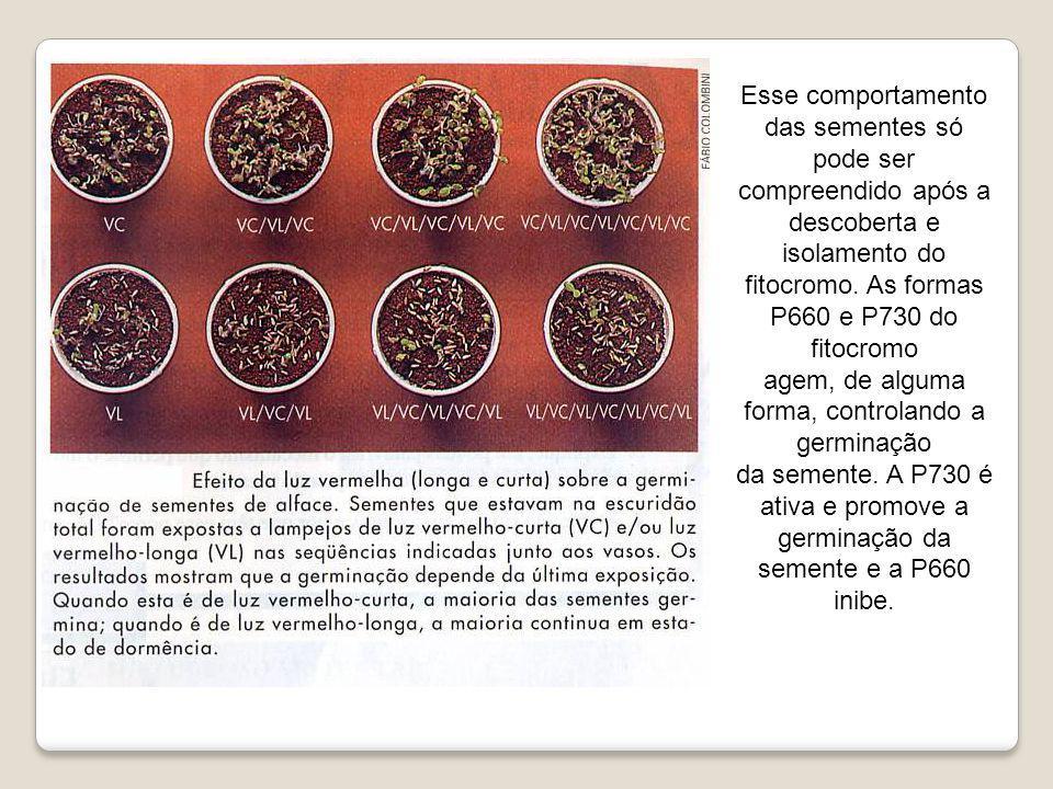 Esse comportamento das sementes só pode ser compreendido após a descoberta e isolamento do fitocromo. As formas P660 e P730 do fitocromo agem, de algu
