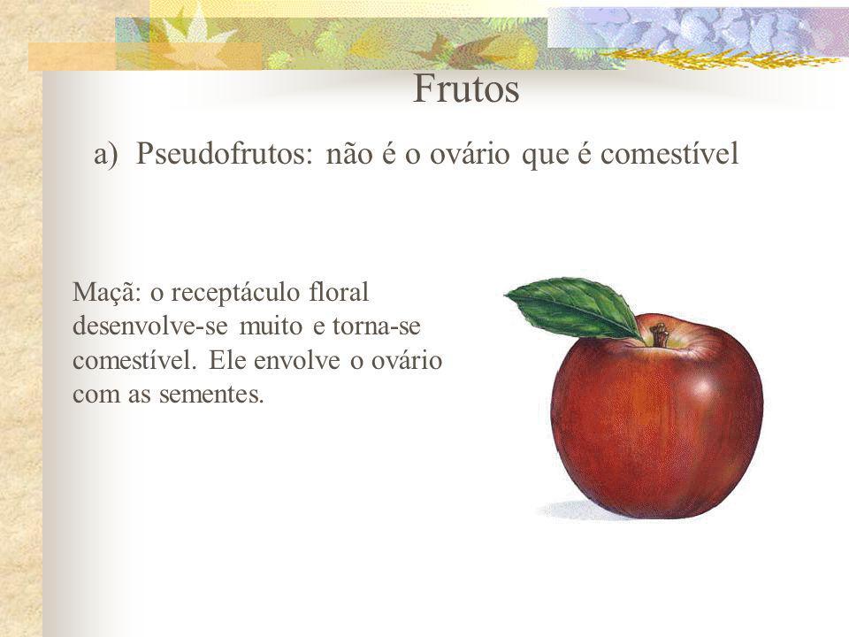 Frutos a)Pseudofrutos: não é o ovário que é comestível Maçã: o receptáculo floral desenvolve-se muito e torna-se comestível. Ele envolve o ovário com