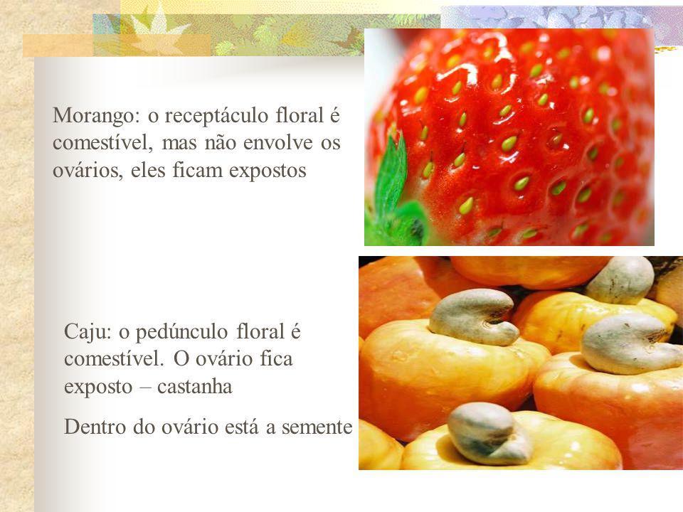 Morango: o receptáculo floral é comestível, mas não envolve os ovários, eles ficam expostos Caju: o pedúnculo floral é comestível. O ovário fica expos