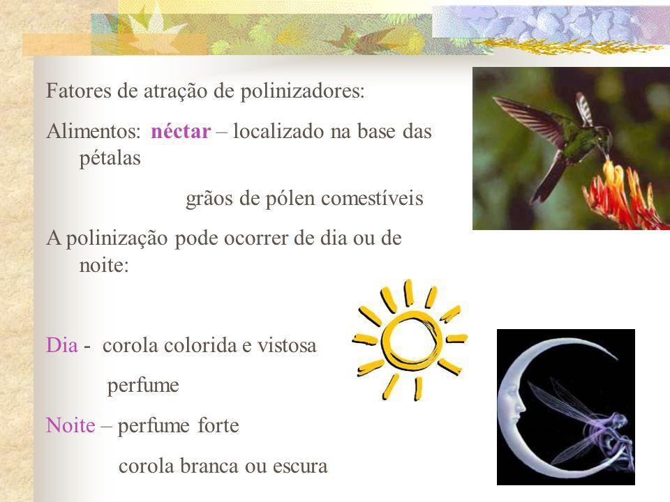Fatores de atração de polinizadores: Alimentos: néctar – localizado na base das pétalas grãos de pólen comestíveis A polinização pode ocorrer de dia o