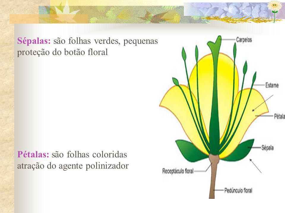 Sépalas: são folhas verdes, pequenas proteção do botão floral Pétalas: são folhas coloridas atração do agente polinizador