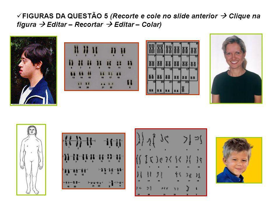 FIGURAS DA QUESTÃO 5 (Recorte e cole no slide anterior Clique na figura Editar – Recortar Editar – Colar)