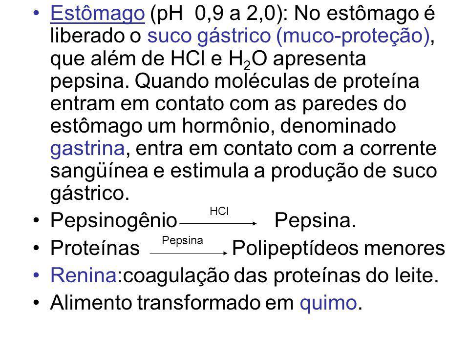 Estômago (pH 0,9 a 2,0): No estômago é liberado o suco gástrico (muco-proteção), que além de HCl e H 2 O apresenta pepsina. Quando moléculas de proteí