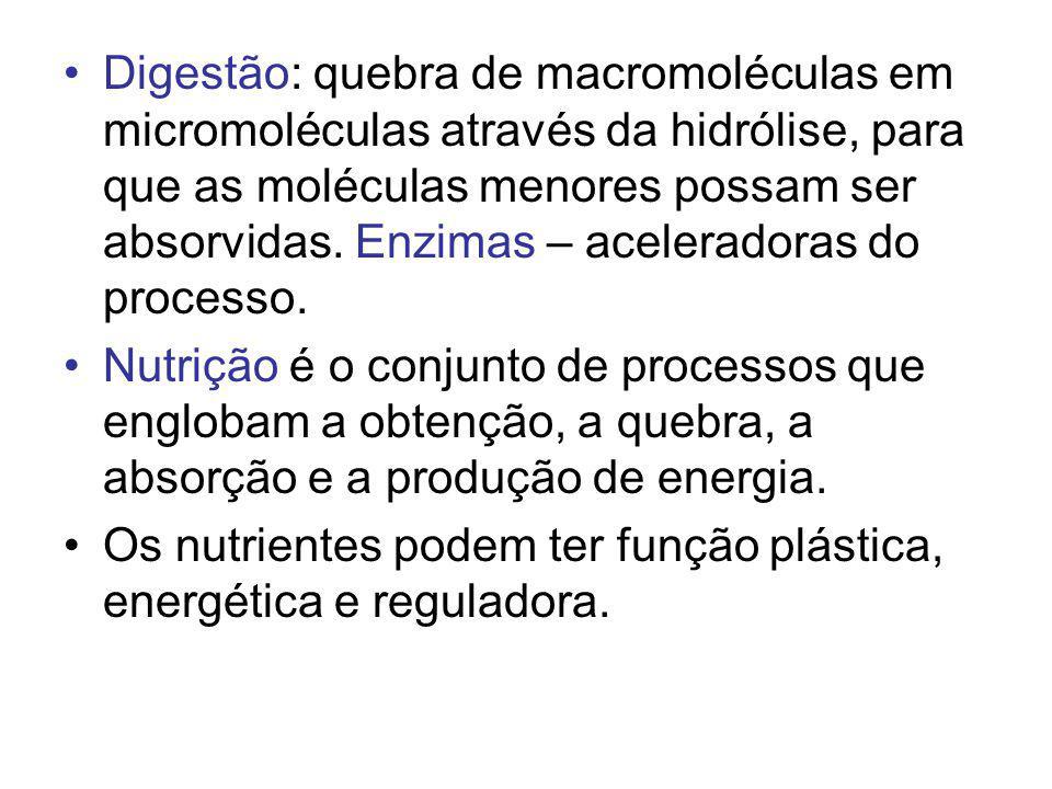 Digestão: quebra de macromoléculas em micromoléculas através da hidrólise, para que as moléculas menores possam ser absorvidas. Enzimas – aceleradoras