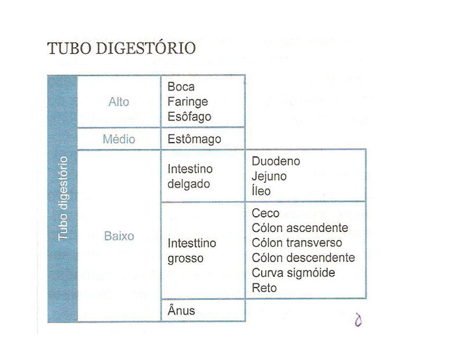 Sistema digestório humano Boca (pH 6,7 até 7,0): onde os alimentos sofrem ação dos dentes (mastigação), da língua (auxilia na deglutição e na mastigação) e da saliva (contém amilase salivar ou ptialina – acelera a digestão do amido).