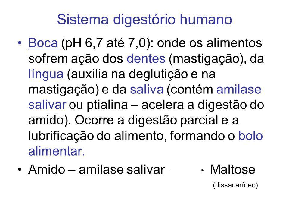 Sistema digestório humano Boca (pH 6,7 até 7,0): onde os alimentos sofrem ação dos dentes (mastigação), da língua (auxilia na deglutição e na mastigaç