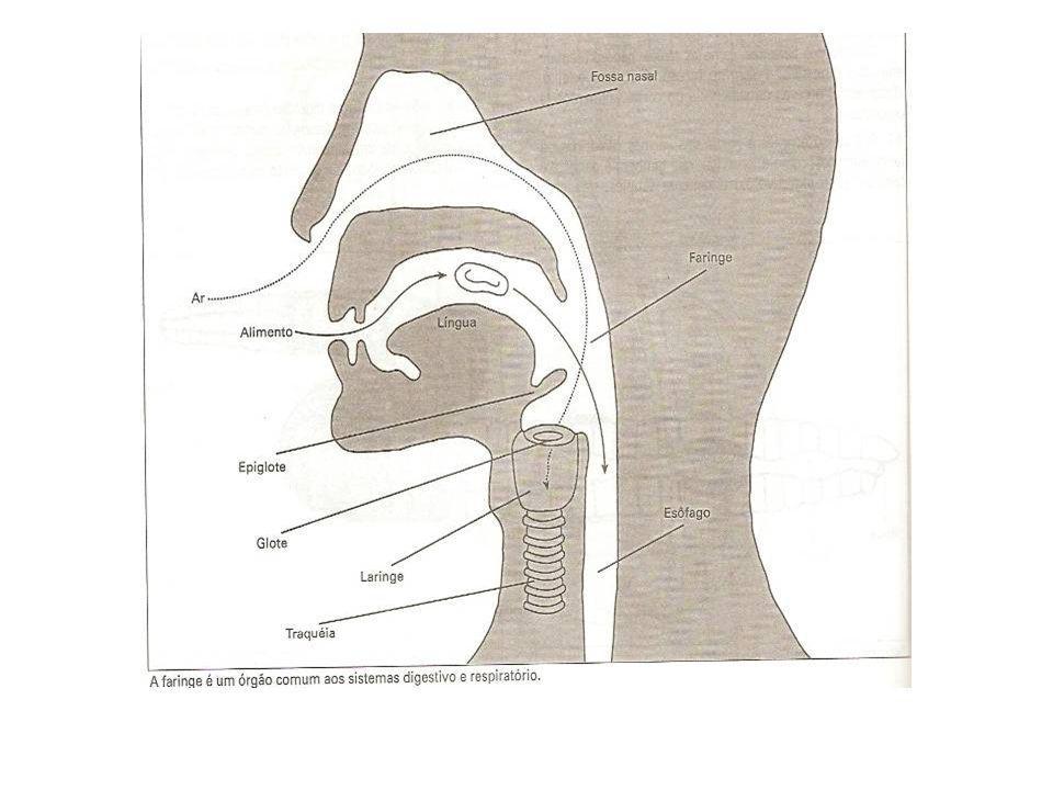 Suco entérico ou suco intestinal (pH 7.0): liberação controlada por reflexos nervosos locais.