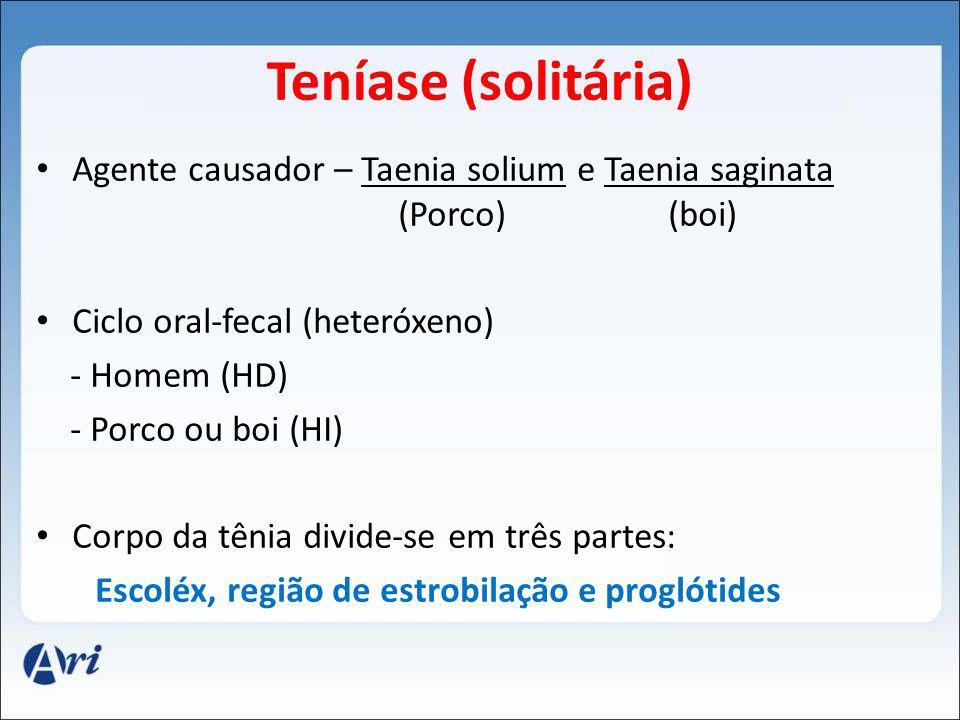 Teníase (solitária) Agente causador – Taenia solium e Taenia saginata (Porco) (boi) Ciclo oral-fecal (heteróxeno) - Homem (HD) - Porco ou boi (HI) Corpo da tênia divide-se em três partes: Escoléx, região de estrobilação e proglótides